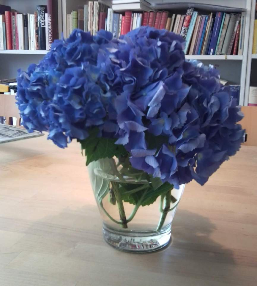 blauehortensien